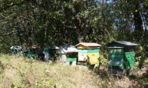 Saint-Amant-de-Boixe-ruches-la-faye