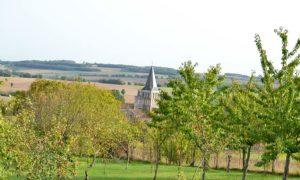 Saint-Amant-de-Boixe-verger-et-clocher
