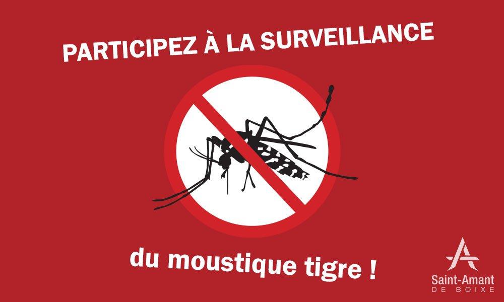 Saint-Amant-de-Boixe-ACTUS-moustiques-tigre